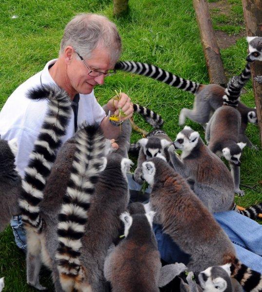 Lemurer 9 Maj 2012 (3